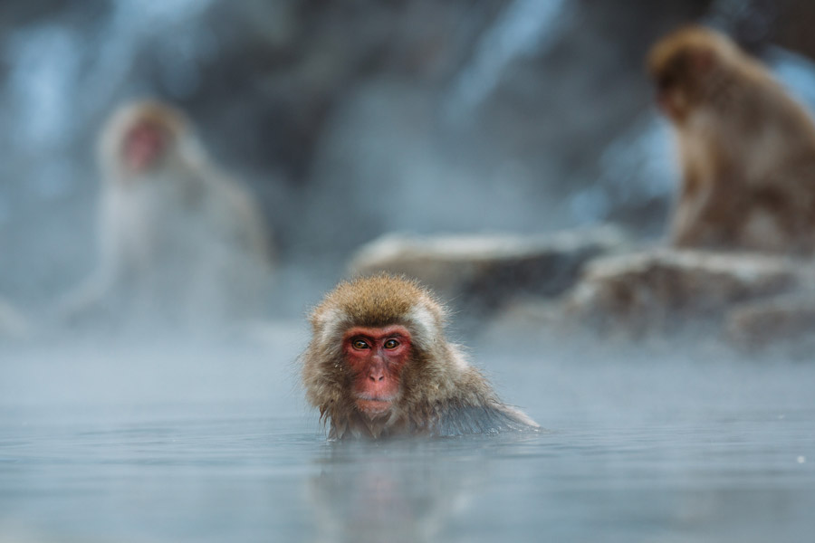 猿 防水工事
